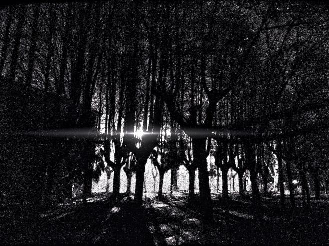 ...in una selva oscura...